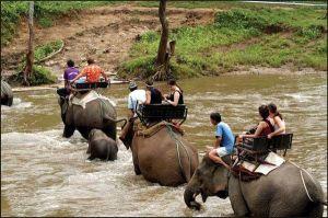 Elephant treks